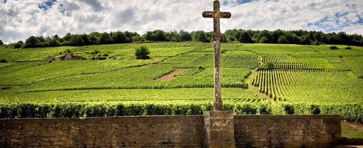 Côte-d'Or vignes