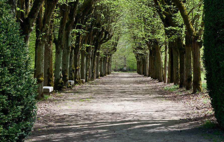 Domaine de Fremigny - Allée 2