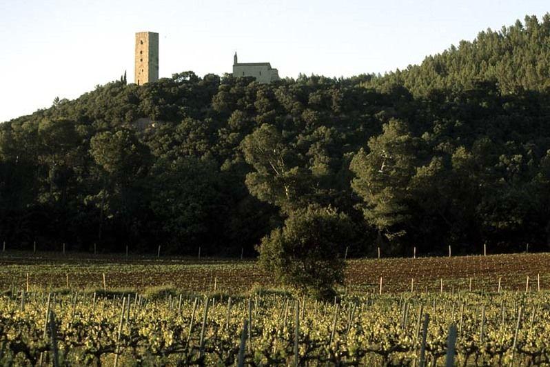 Château de Saint Martin - Vignes