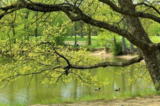 Orangerie de Sébastien - Etang du Parc de Lacroix Laval
