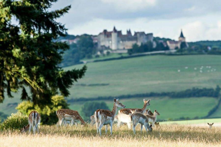 Chateau Sainte Sabine -Parc & Extérieur (3)