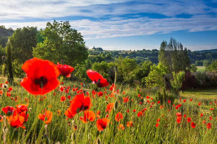Campagne Saint Lazare - Environement & Parcours de la Biodiversité (12)