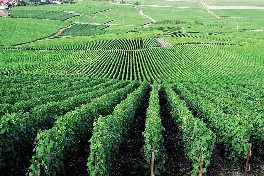 Le Clos des Terres Soudées - Vignes
