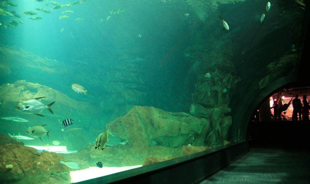 Aquarium de Paris  Tunnel à requins