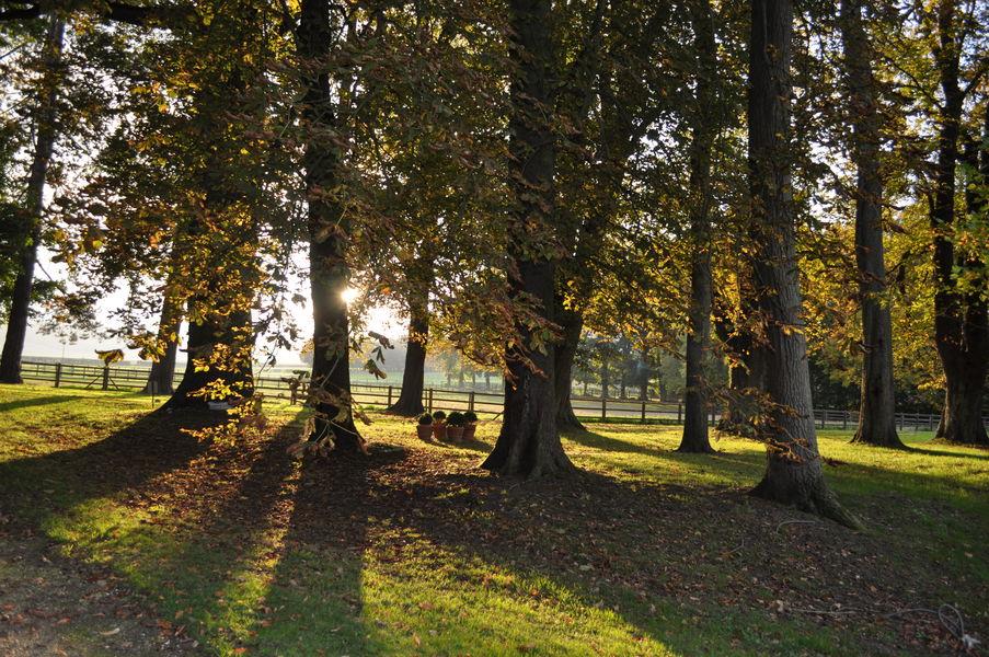 Château d'Auteuil  Parc de 3 hectares, effets de lumière dans les arbres