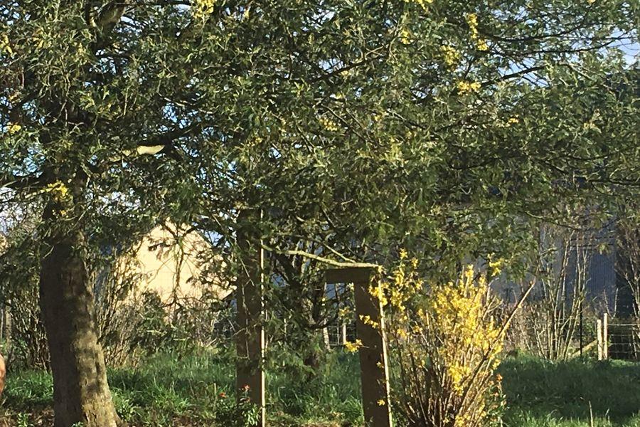 Bon-Air A votre guise... Il fait beau, hop ! Les tablées sous les arbres remarquables ! Mimosas, chênes, maronniers...