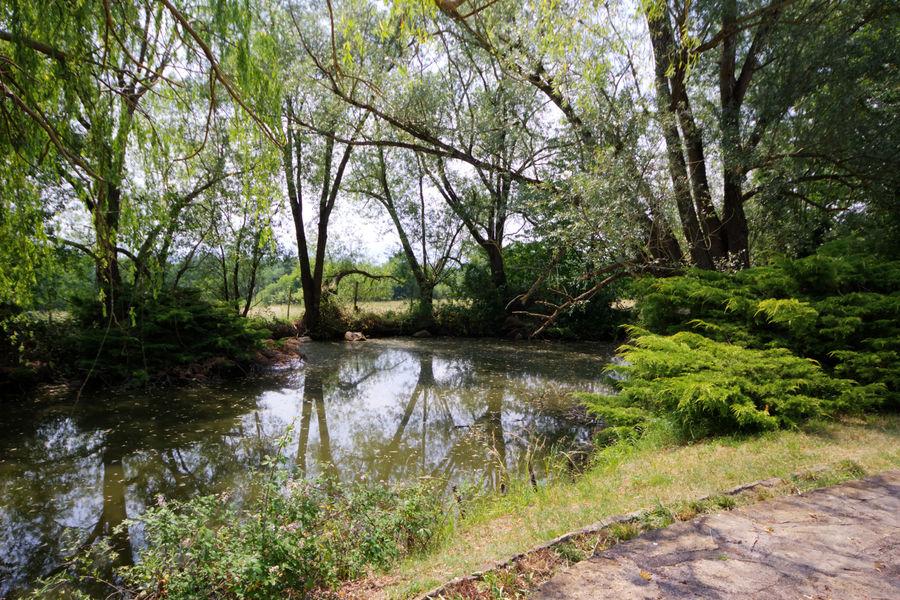 Gite Des Roties petit étang de pêche