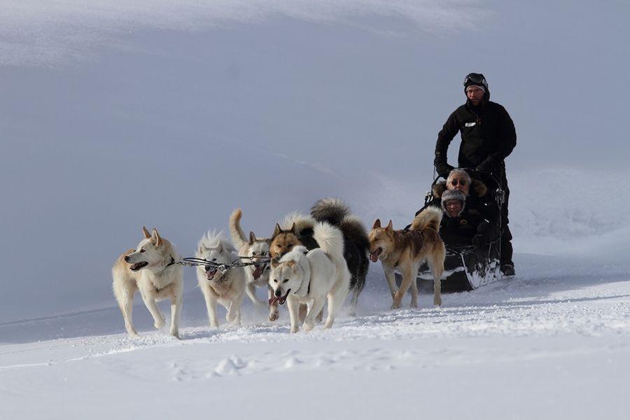 Arc 1950 ***** Pierre & Vacances Activités chiens de traineaux