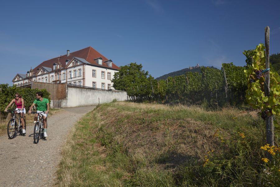 Hôtel Val Vignes vignoble