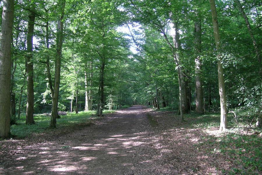 Château de Courtalain une allée du parc