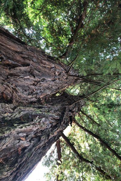 La Villa Rochette Parc arboré (Séquoia)