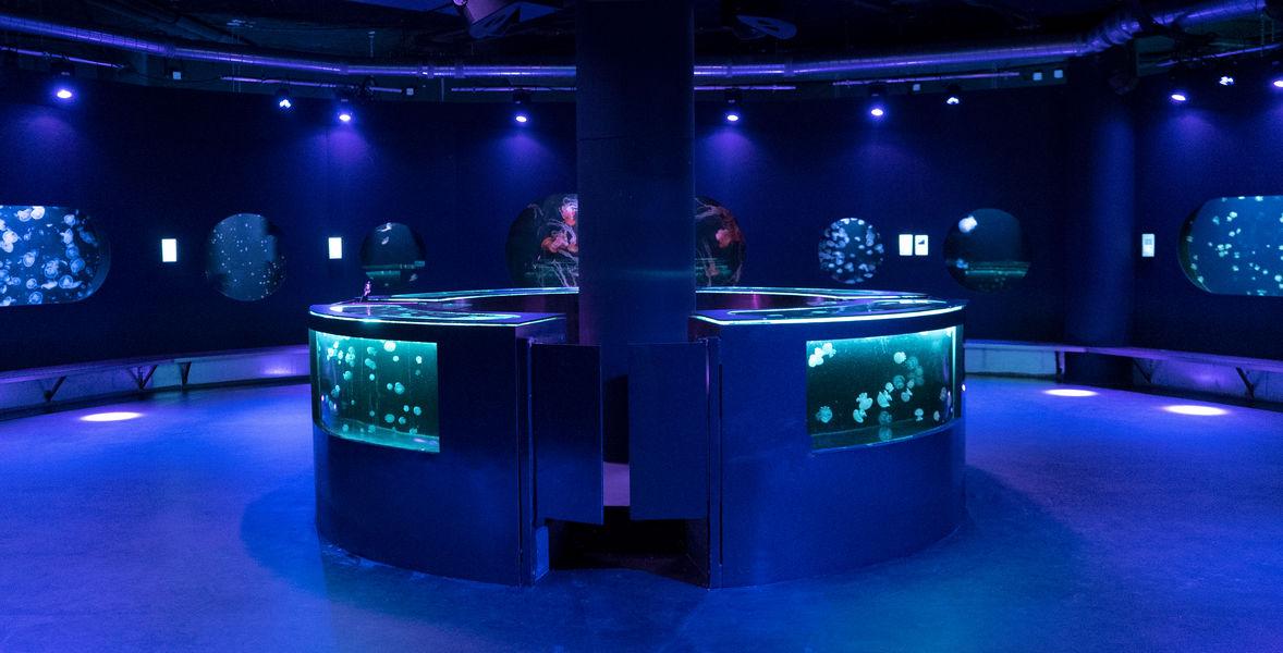 Aquarium de Paris  Médusarium