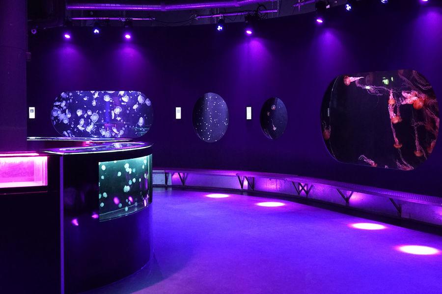 Aquarium de Paris  39