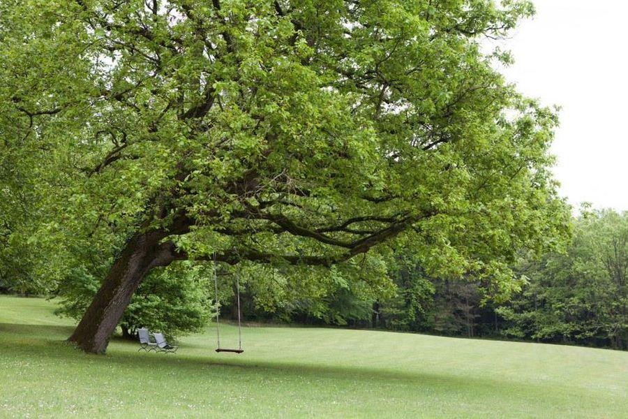Domaine de la Tortinière **** Le parc