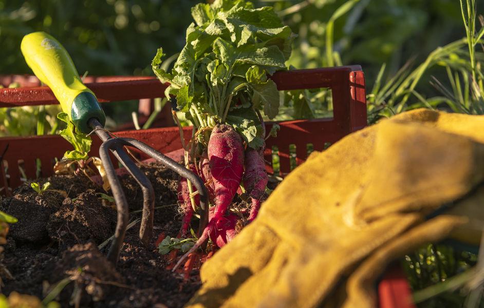 Le Domaine Tarbouriech Activité jardinage - sur mesure
