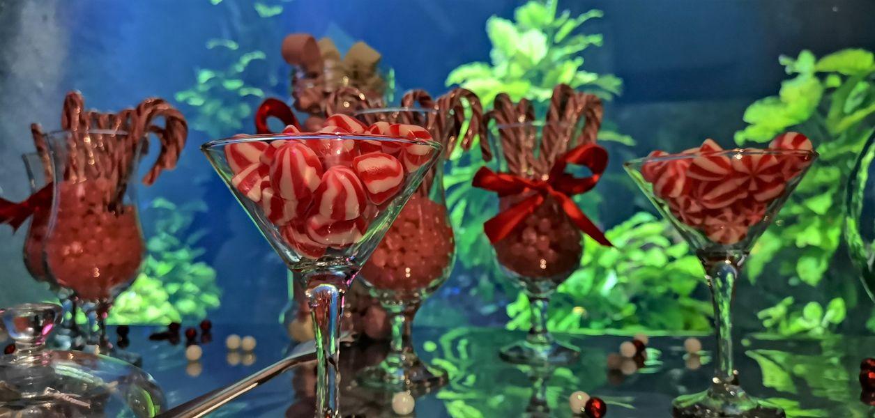 Aquarium de Lyon Candy bar
