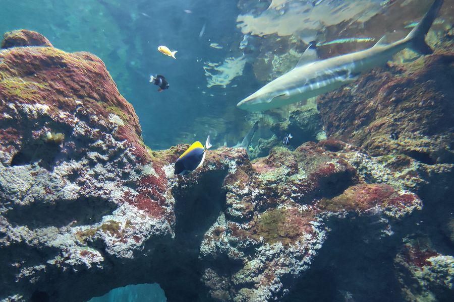 Aquarium de Lyon Fosse aux requins