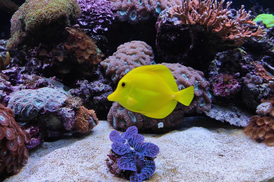Aquarium de Lyon 48