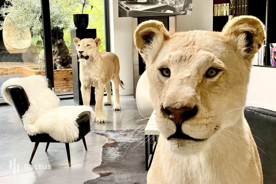 Le Loft Atypique Animaux issus de Zoos en accord avec Le Ministère de l'Environnement